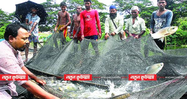 কুমিল্লায় চাহিদার তুলনায় দ্বিগুণ মাছ উৎপাদন