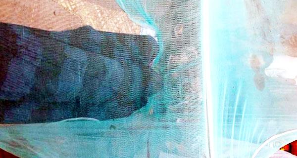 চান্দিনায় সাপের কামড়ে নিহত, ওঝার অপেক্ষায় মশারি বন্দি মরদেহ