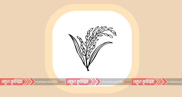 কুমিল্লায় ধানের শীষের নির্বাচনী কেন্দ্র পরিচালক গ্রেফতার