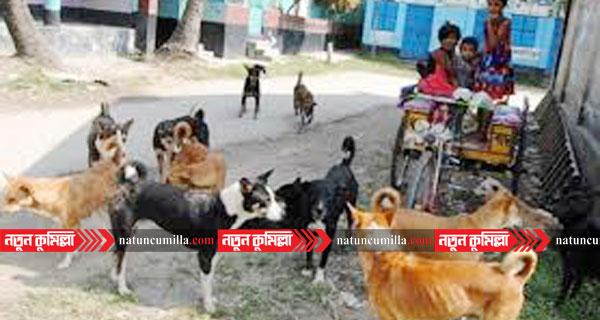 কুমিল্লায় কুকুরের কামড়ে আহত অর্ধশতাধিক