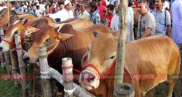 কুমিল্লায় ৩৯৩ স্থানে বসছে কোরবানির পশুর হাট