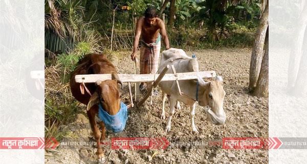 কুমিল্লায় বিলুপ্তির পথে গ্রামীণ ঐতিহ্য লাঙ্গল-জোয়াল
