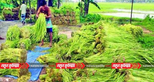 কুমিল্লার লতি দেশের চাহিদা মিটিয়ে রপ্তানি হচ্ছে বিদেশে
